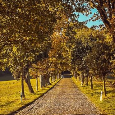 Herbstliche Allee auf Rügen #herbst #inselrügen