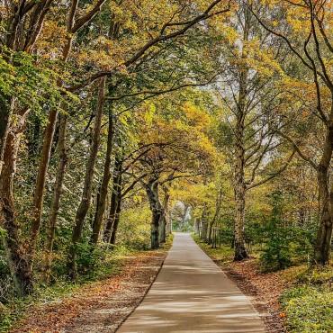 Noch eine Allee auf Rügen. So schön ist der Herbst. Schreib uns bitte welche Allee wir noch fotografieren sollen. Wir sind wieder auf Tour über die Insel. #ruegen #rügen #ostsee #virtualruegality #mitsicherheitRügen #inselrügen #wirsindinsel #ostseeliebe #mvtutgut #inselruegen #aufnachmv #rügenliebe #ruegenfotos #ig_ruegen #mvhältzusammen #ig_vorpommern #ostseestrand #sonneundmeer #herbst #autumn #autumnvibes #allee