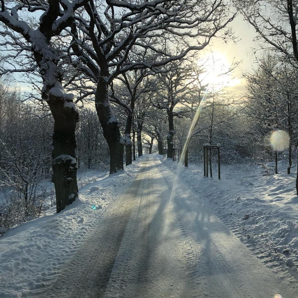 Allee im Winter bei Altensien @ostseebadsellin
